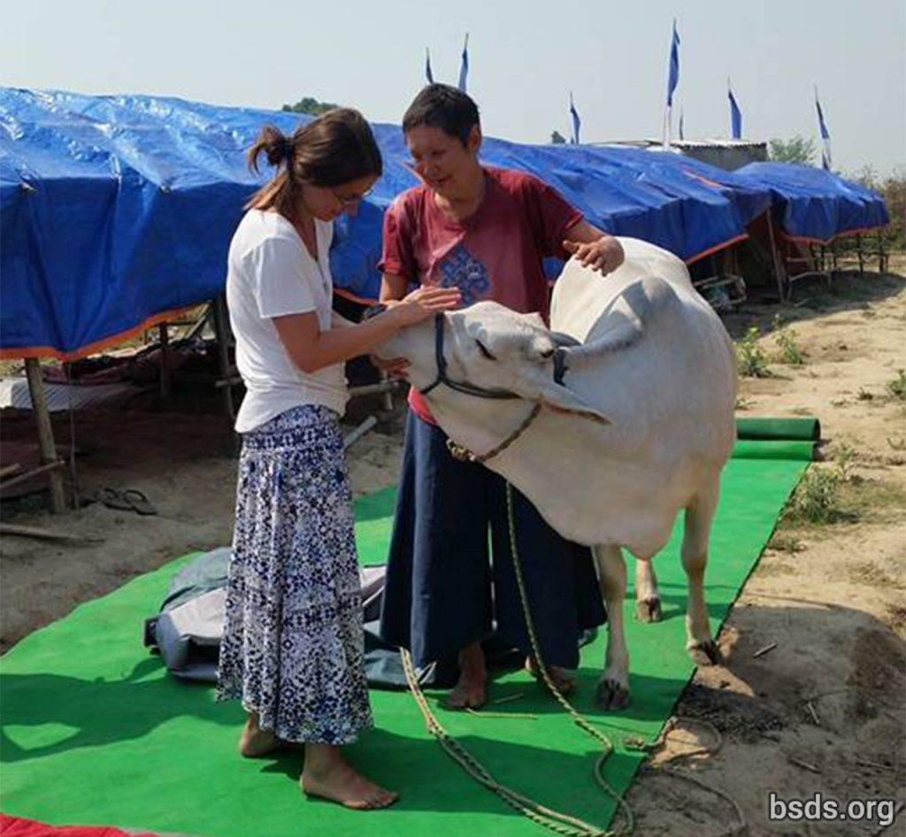 maitri-cow-patharkot